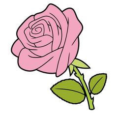Illustration of a pink rose