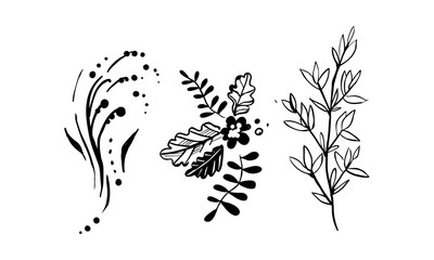 Leaves of trees and plants set, floral design elements vector Illustration on a white background