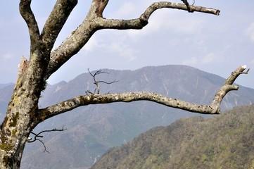 檜洞丸の枯木