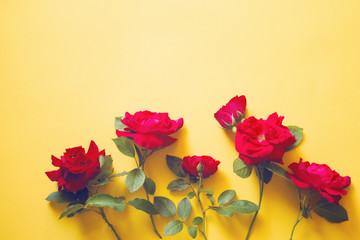 Red roses on a yellow background, the top view, the copy of space. Flower background