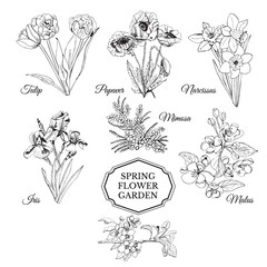 Set of hand drawn graphic  sketch of spring flowers for flower garden.