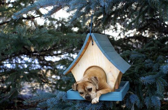 dog stuck in small birdhouse