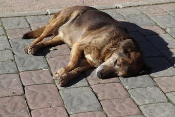 street dog sleeping on the street