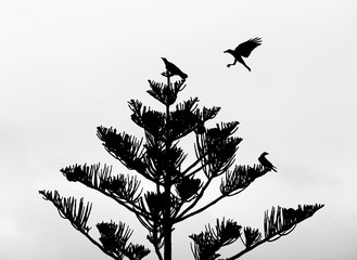 Sİlhouette crows over the tree branches.