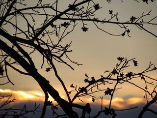 Zweige vor Wolken während der Dämmerung im Dezember in Deutschland, DezemberstimmungZweige