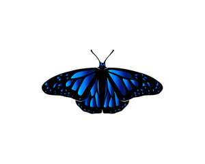 Butterfly with big blue wings on white background.