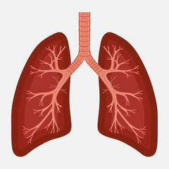 human lung anatomy diagram. illness respiratory cancer