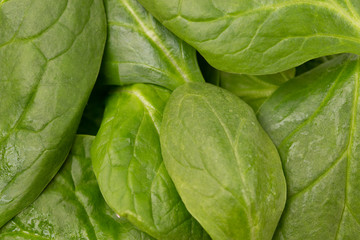 Background of Fresh Spinach Leaves