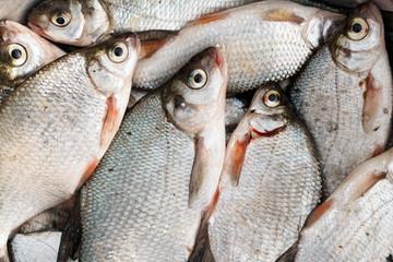 Pile of bream fish, close-up, toned