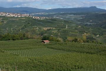 Trentino paesaggio verde