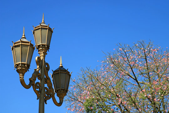 Gold Colored Classy Lamp Post with Flowering Silk Floss Tree against Vivid Blue Sky in Buenos Aires, Argentina