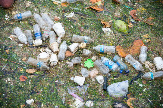 Plastic water bottles, cups, and bits of polystyrene float with leaves and seagrass in Biscayne Bay, where ocean pollution is a persistent problem.