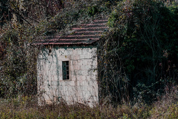 abandoned house covered by vegetation
