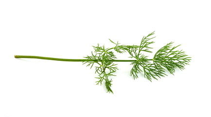 Single branch of the dill herb isolated over the white background.