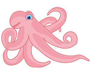 Vector illustration of the rose octopus on white background