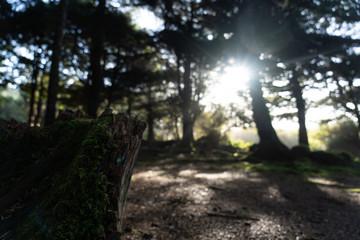 Sunlight in open rainforest