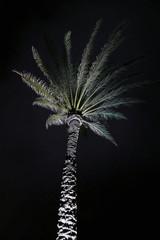 Looking up at palm tree at night