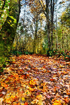 Woodland path covered in fallen leaves