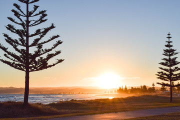 A yellow sun setting between two tree silhouettes along the beach in Gisborne, New Zealand.