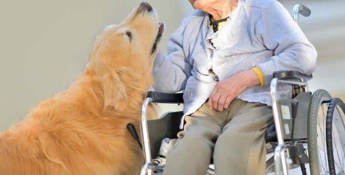 老人介護施設・母と介助犬のひととき