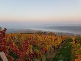 Herbst am Eisenberg, Burgenland mit buntem Laub und Aussichtsplattform Weinblick