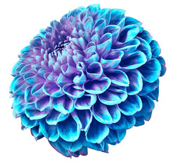 Canvas Prints Dahlia turquoise dahlia flower on a white isolated background. Closeup. Nature.