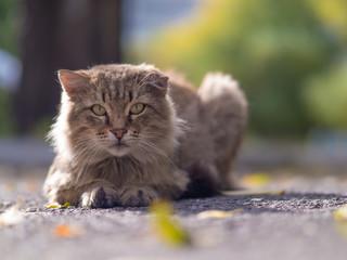 Gray homeless longhair cat sitting on a ground