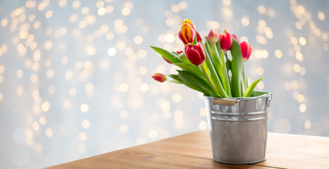 spring and gardening concept - red tulip flowers in tin bucket on wooden table over festive lights background