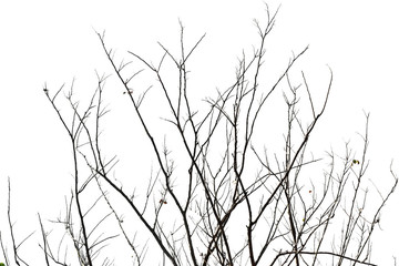 Dry tree branches isolated on white background.