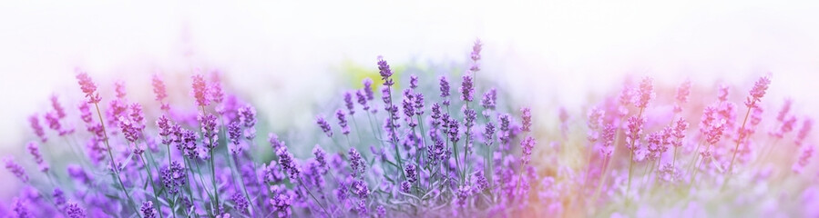Keuken foto achterwand Lavendel Selective and soft focus on lavender flower,  beautiful lavender flower in summer