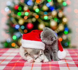 Playful kitten sniffing sleeping puppy in red santa hat with Christmas tree on a background