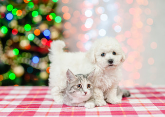 bichon frise puppy hugs cat with  Christmas tree on a background