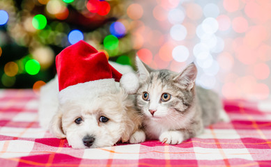 puppy and kitten in red santa hats with  Christmas tree on a background