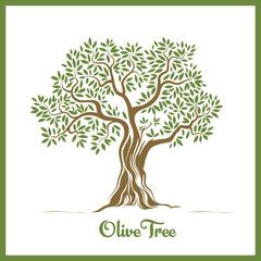 Olive tree / Zeytin ağacı