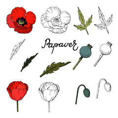 Set of Hand drawn elements of Poppies,Vector