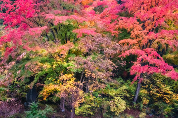 Autumn Forest in in November, Japan