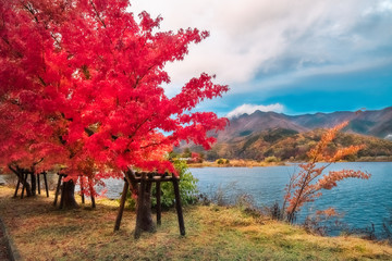 Lake side at Lake Kawaguchi, one of the scenic five lakes - in the neighbourhood of Mount Fuji, Japan.