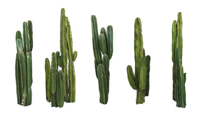 Tuinposter Cactus Set of cactus real plants isolated on white background