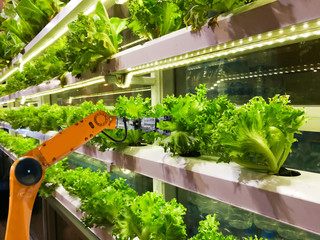 Smart robotic farmers in agriculture futuristic robot automation to vegetable farm Wall mural