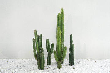 Cactus real plants set with white rocks floor in desert isolated on white background