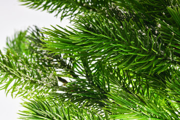 Many coniferous branches of ornamental spruce on a light background
