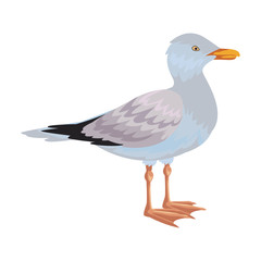 seagull isolated icon