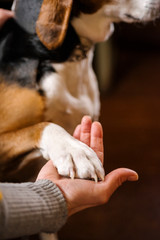 Woman's hand holding paw of dog, close-up