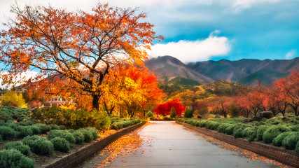 Spectacular autumn colors after rain in Fujikawaguchiko, Japan.