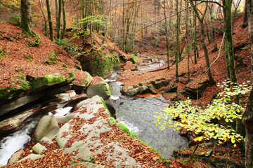 Creek in the autumn beech forest