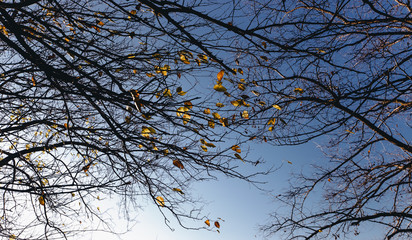 Wall Mural - Autumn leaves with the blue sky background