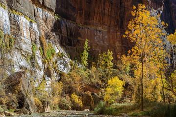Zion national Park Utah Fall Landscape