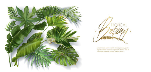 Vector banner with tropical leaves on white