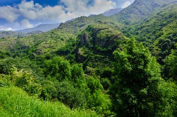 Forest landscape, Armenia