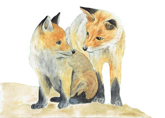 Watercolor illustration foxes isolated on white background. Mothers day card.  Hand painting forest animals.